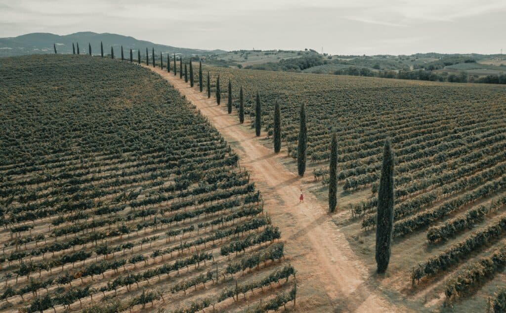 The Dirt Roads of Tuscany