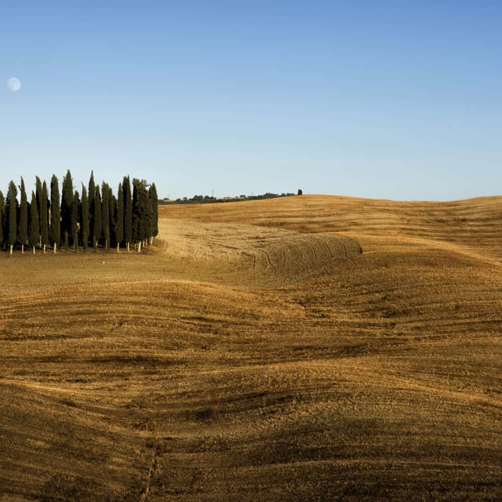 Cypress circle in val d'orcia tour