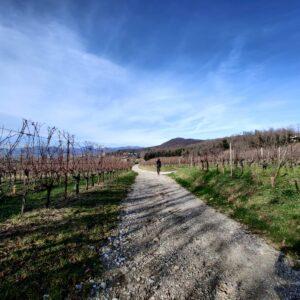 Easy Montalcino Bike Tour