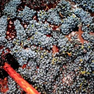 Half Day Brunello Wine Tour