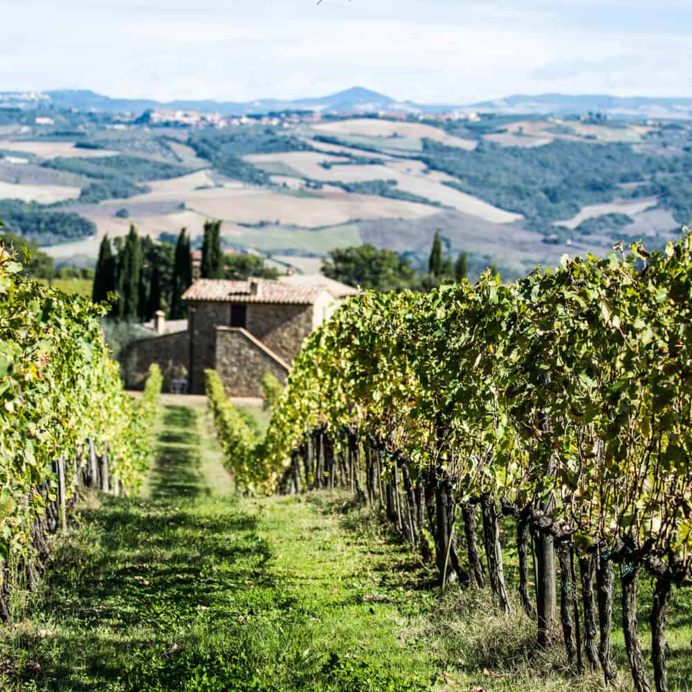 Brunello di Montalcino wine Tours adventure