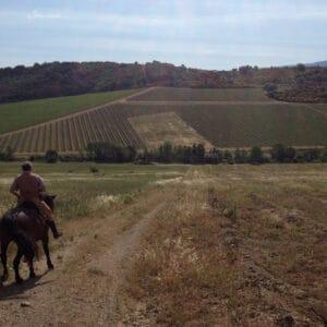 Horseback Riding & Lessons
