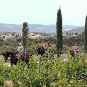 Horseback Riding & Wine Tasting Tour