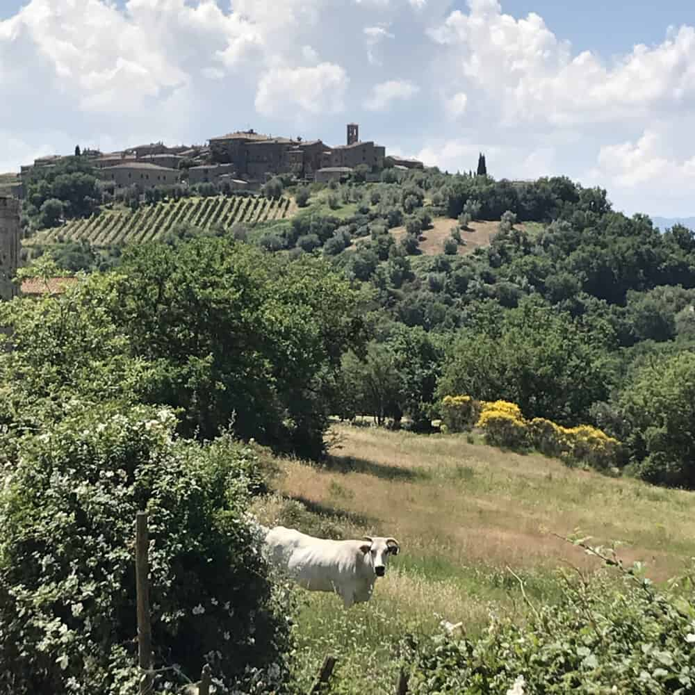 From Montalcino to Sant'Antimo trekking & wine tour