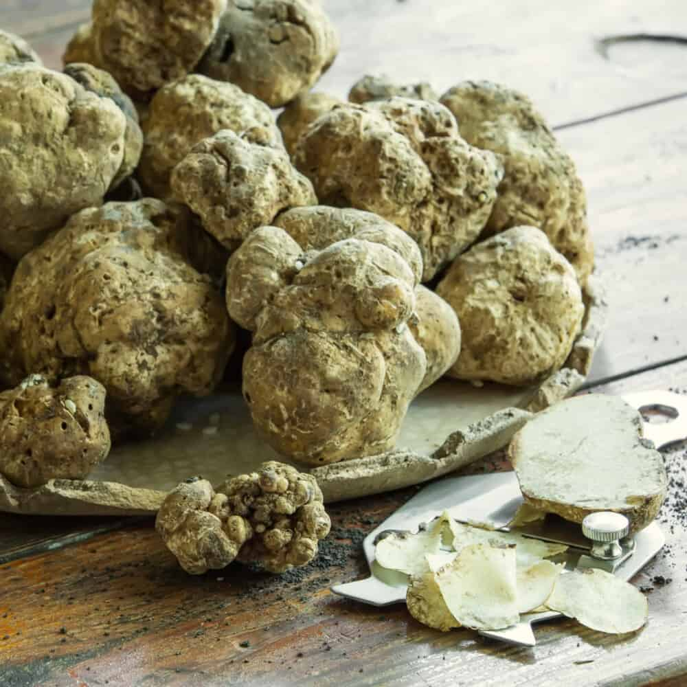Truffle Hunting and Cooking Class Montalcino Tuscany
