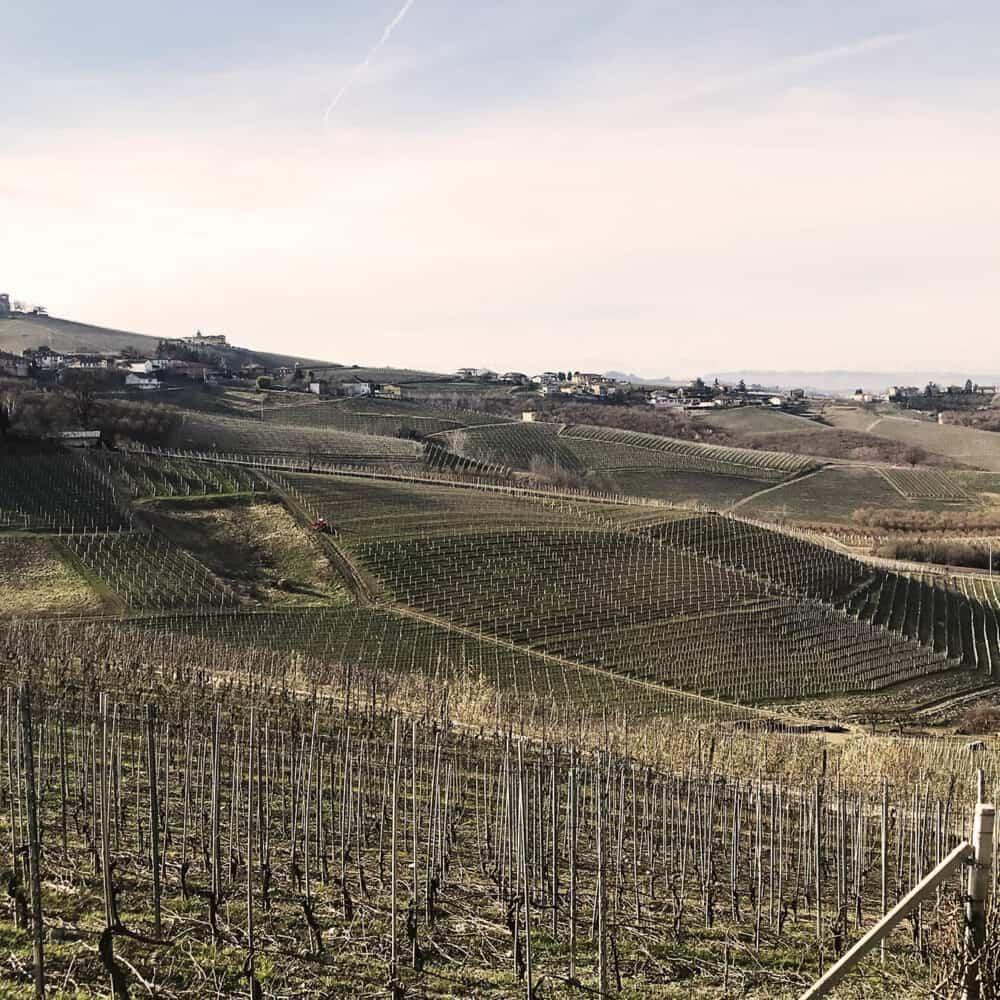 Barolo and Barbaresco vineyards in Piedmont