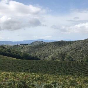 Brunello di Montalcino short hiking tour