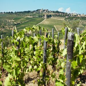 Barolo & Barbaresco Wine Tour