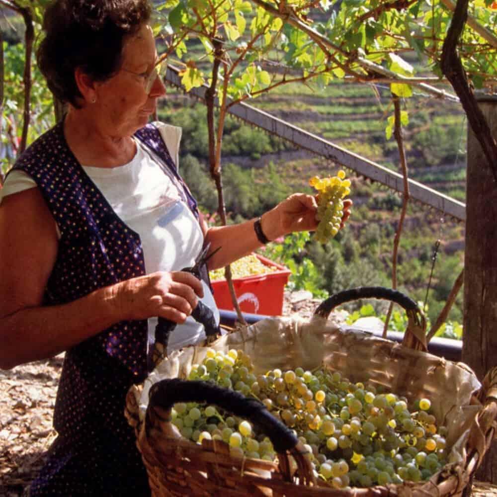 Cinque Terre Walking Wine Tour