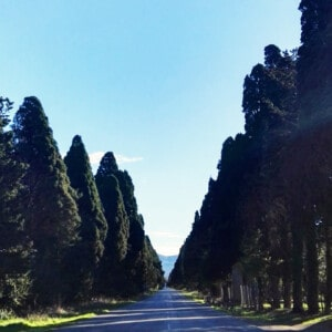 Bolgheri & The Tuscan Coast