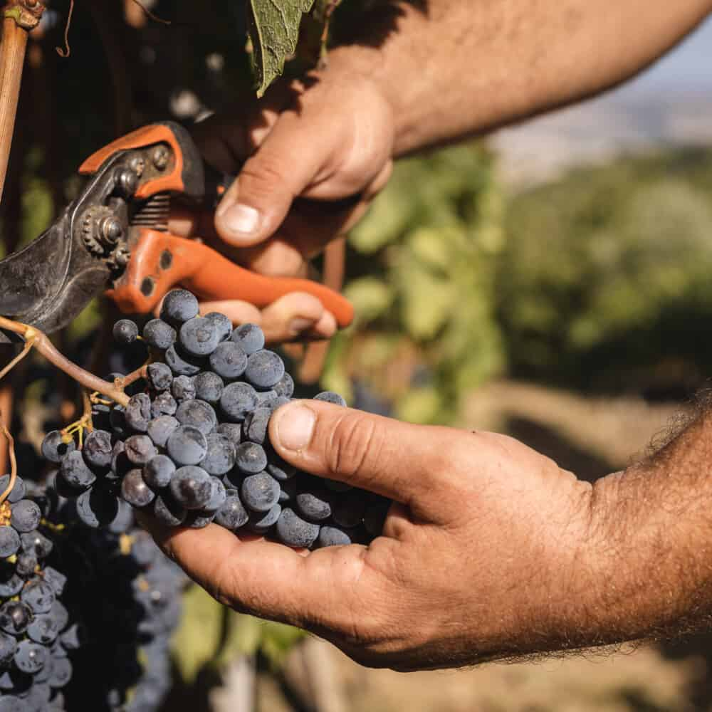 Brunello Montalcino Wine Tours