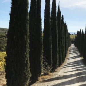 Via Francigena, the Great Pilgrim Route