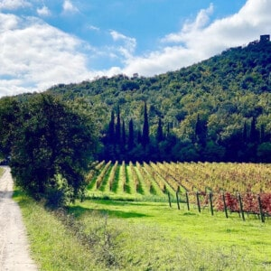 Bolgheri and the Super Tuscans