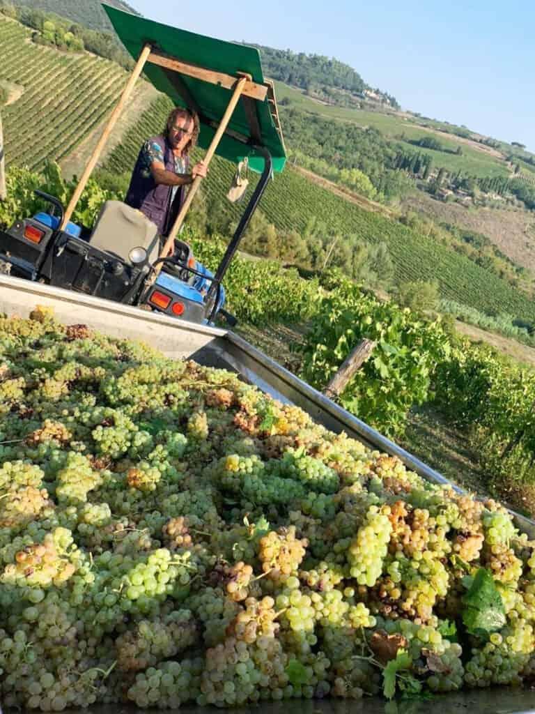 Vernaccia di San Gimignano - Montalcino Wine Tours
